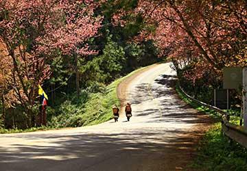 trekking-chiang-rai-thaton-village-private-3d