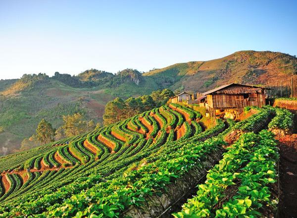 Thailand travel guide Strawberry field Doi Ang Khang , Chiang Mai Thailand