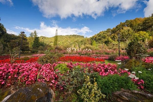Thailand-travel-guide-flower-garden-Doi-Ang-Khang-Chiang-Mai-Thailand