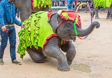 chiang-mai-trekking-4d3n-elephant